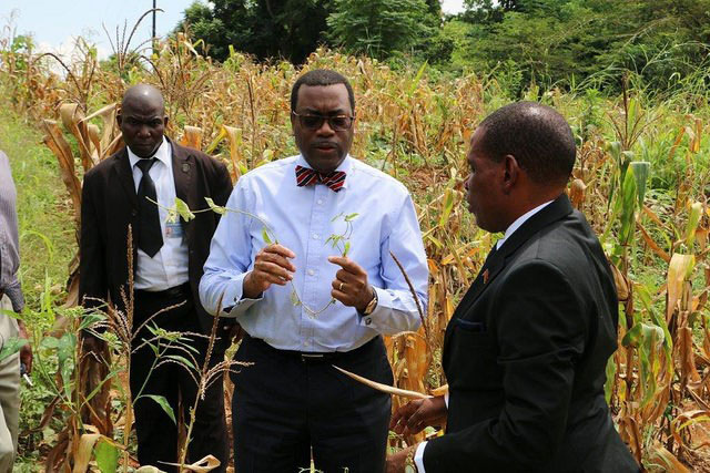 How Agriculture Could Stem Human Capital Flight from Africa
