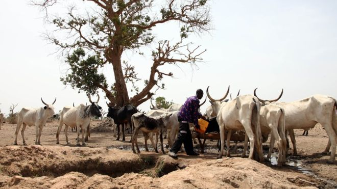 How Nigeria grazing Ban Will Affect Economy