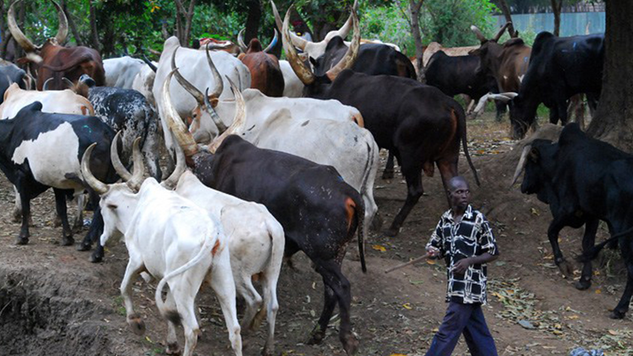 Nigeria: 30 Dead in Farmers-Herdsmen Clash