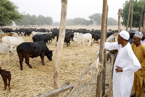 Buhari's Home State Allocates 5, 300 hectares for Cattle Colony