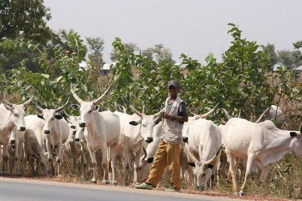 ECOWAS holds confab on farmers-herders clashes