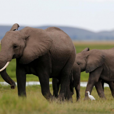 Mystery death of 26 elephants unsettles Kenya, govt. orders investigation