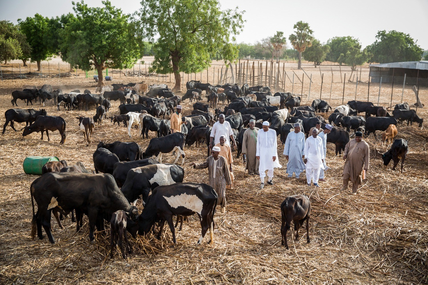 Nigeria's president Buhari may have suspended RUGA project