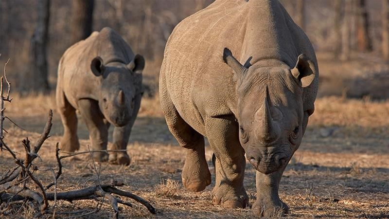 World's oldest rhino dies in Ngorongoro, Tanzania, aged 57