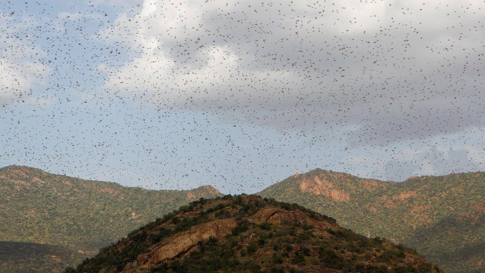 VIDEO: UN fears unprecedented locust swarms in East Africa may spread
