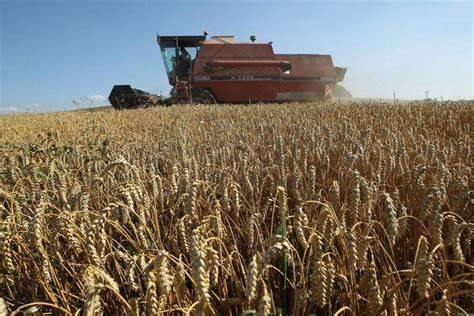 Food shortage: Cameroon Bans Cereal Exports to Nigeria