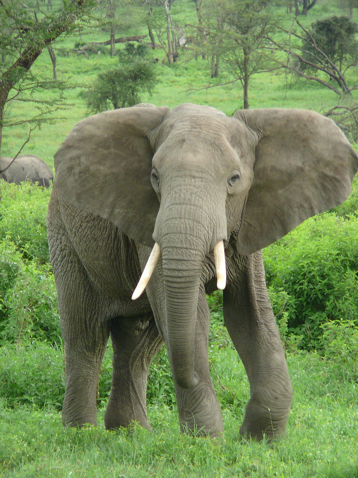Botswana depopulating its 130,000 Elephants, repatriating a lot to Angola