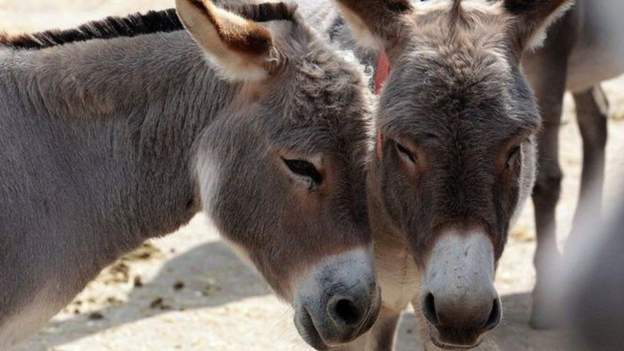Return of Chinese deals as ban lifted on Kenya's donkey meat trade