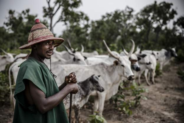 Buhari approves revisiting herdsmen rights on cattle grazing in 368 routes