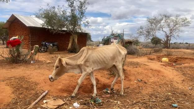 Humans, animals die in piecemeal as drought intensifies in Kenya